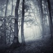 Dark woods with thick fog — Photo