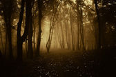 Deep dark woods on Halloween — Stock Photo