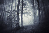 Dark woods with thick fog — Stock Photo