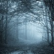 Road in Halloween dark forest with fog — Stock Photo #54731121