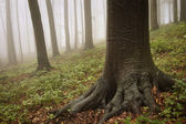 Enchanted forest with mysterious fog — Stock Photo