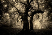 Spooky looking tree with twisted branches in mysterious forest with fog — ストック写真