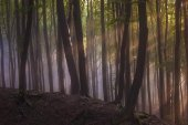 Sun rays in forest with fog — Stock Photo