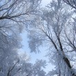 Frozen branches covered with frost — Stock Photo #74288383