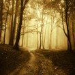 Road through misty forest — Stock Photo #74289445