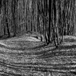 Shadows on the ground in the forest — Stock Photo #74289927