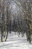 Forest in winter with frozen trees — Stock Photo