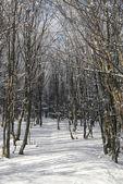 Kışın donmuş ağaçlar ile orman — Stok fotoğraf