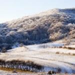 Beautiful winter landscape — Stock Photo #74291309
