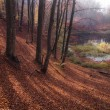 Shadows on the ground of the forest — Stock Photo #74298693