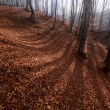 Shadows on the ground of the forest — Stock Photo #74298715