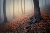 Spooky dark forest — Stock Photo