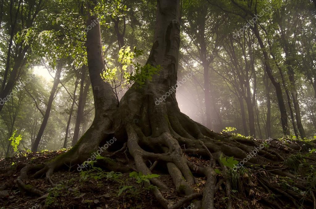 Фотообои Старое дерево с вывороченными корнями в лесу