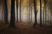 Spooky dark forest — Stock Photo
