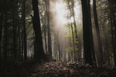 Dunklen Spuk nebligen Wald — Stockfoto