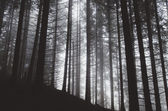 Spooky forest with trees — Stock Photo