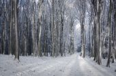 Frozen trees in forest — Stock Photo