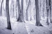 Congelados de árvores na floresta — Fotografia Stock