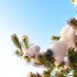Christmas evergreen  tree with fresh snow on white — Stock Photo #56140651