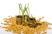 Stack of coins and rice seeds — Stock Photo