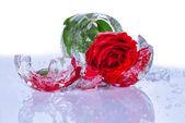 Rose binnen een ijs — Stockfoto