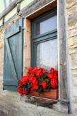 Květiny v okně — Stock fotografie