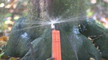Irrigation — Stock Video