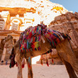 The Treasury, Petra — Stock Photo #55150459