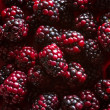 Blackberries from the forest — Stock Photo #69196325