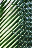 Coconut leaves weave — Foto Stock