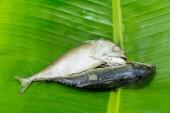Short-bodied mackerels fishes — Stock Photo