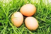 3 eggs on green grass — Stock Photo