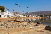 Lake of City Pushkar, India — Stockfoto