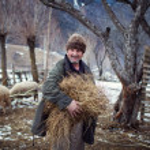 MAGURA, ROMANIA - 05 FEB: Old romanian peasant preparing to give food to farm animals on February 05 2015. Magura is a village in Carpatian Mountain — Stock Photo #64367811
