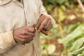 Man cutting a cigar with Cuba's traditional knife — Stockfoto