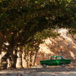 Classic old car under trees in Cuba — Stock Photo #68574367