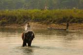 Man washing his elephant on the banks of river in Chitwan park in Nepal — Stock Photo