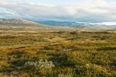 Summer tundra — Stock Photo