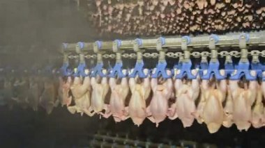 Chicken meat factory — Stock Video
