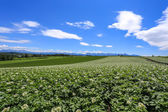 Agriculture at remote area, Hokkaido — Stock Photo