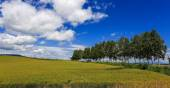 Agricoltura alla zona remota, Hokkaido — Foto Stock