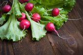 Lettuce and radishes  — Stock Photo