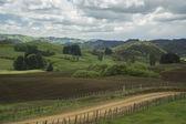 Farmlands. New Zealand — Stock Photo