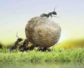 Team of ants — Stock Photo