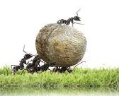 команда муравьев — Стоковое фото