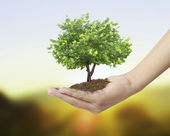 Holding a tree — Stock Photo