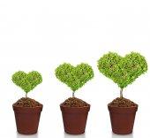 plant in pot  — Stock Photo