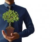 Hand plant ,tree  — Stock Photo