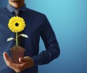 Sunflower in hands — Stock Photo