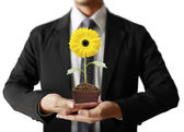 Businessman holding sunflower in hands — Stock Photo